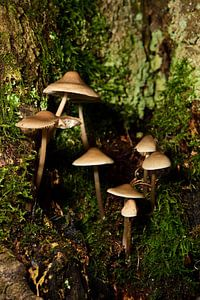 Paddenstoelen in een boomholte van Gerard de Zwaan