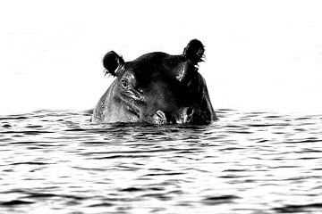 Nijlpaard van Henk Langerak