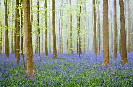 Lente bos von Sjoerd van der Wal