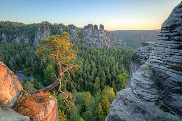 Pine tree at Bastei in Saxon Switzerland van Michael Valjak