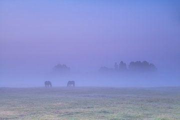 Horses in the fog sur Olha Rohulya