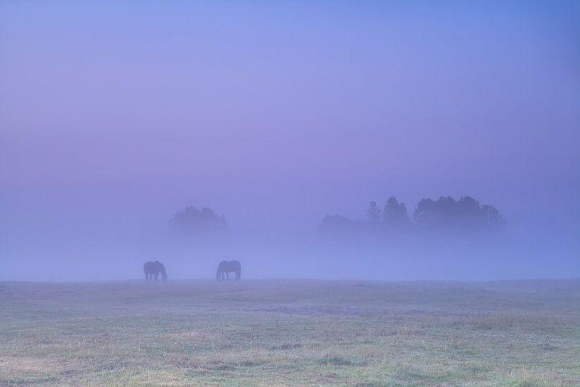 Horses in the fog van Olha Rohulya