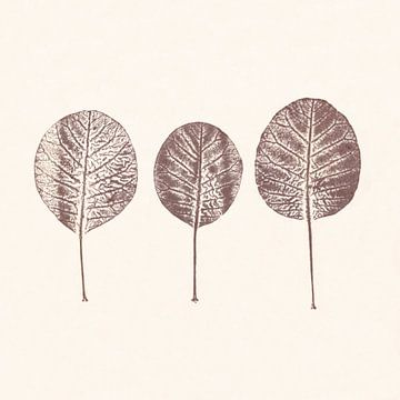 Cotinus leaves van Cynthia Jagtman