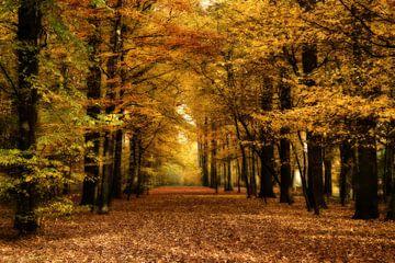 Herfst sur Vandain Fotografie