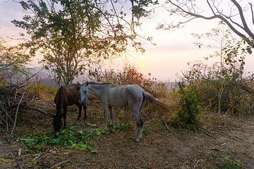 Mooie zonsondergang in Minca, Colombia van Selma Hamzic