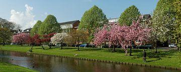Rotterdamse bloesempracht van Fons Simons