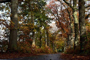 """oude eiken herfst serie van Janny Schilderink......Atelier """"de Tuute """""""
