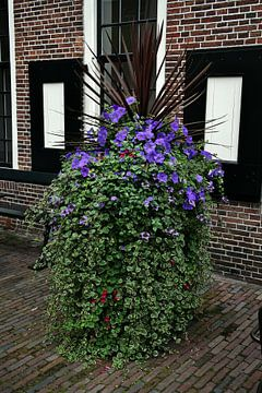 Bloemen in Groningen. van Hans Jansen