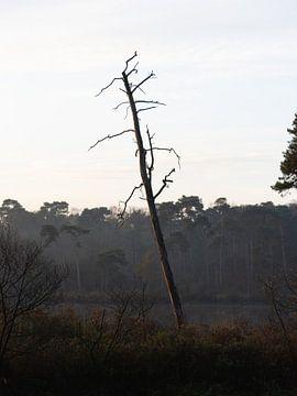 Baum in den Oisterwijkse Vennen von Anita Visschers