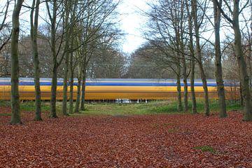 Nederlandse trein door bos.
