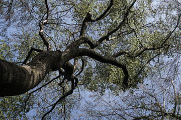 Onder de boom van DuFrank Images