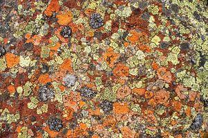 Kleurige patronen van korstmossen in de bergen. van