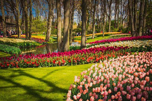 Een park vol tulpen