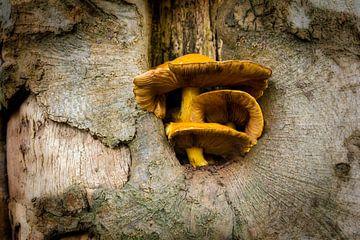 Paddestoel in boom van Lyonne Verweij