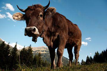 Koe in de Oostenrijkse Alpen van Tanja Riedel