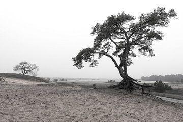 bomen in zwart wit van Robin van Maanen