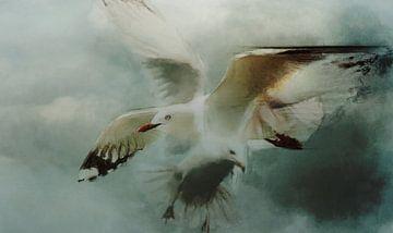 Meeuwen in vlucht. van Yolanda Bruggeman