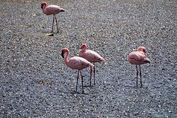 Resting Flamingo's van Erna Haarsma-Hoogterp