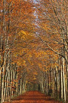 Herbst von Jeanine den Engelsman