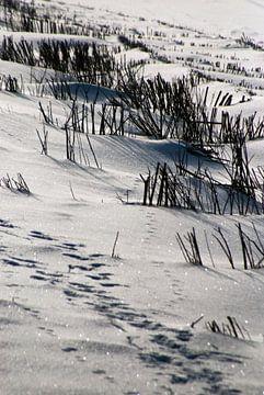 Dünenschutz in Schnee von Norbert Sülzner