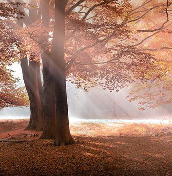 Herfstbos van Karel Ton