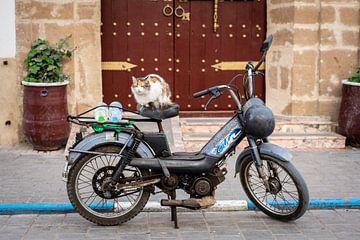 Eine Katze auf einem Oldtimer-Motorrad in Marokko von Ellis Peeters