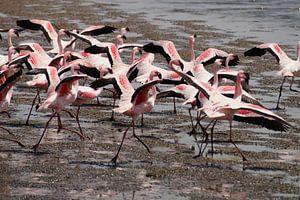 Opvliegende flamingo's van Erna Haarsma-Hoogterp