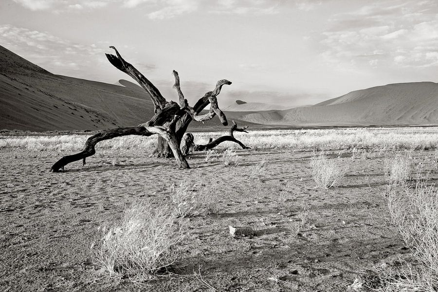 verstilde boom nabij dune 7 (Sosusvlei) in Namibië van Jan van Reij