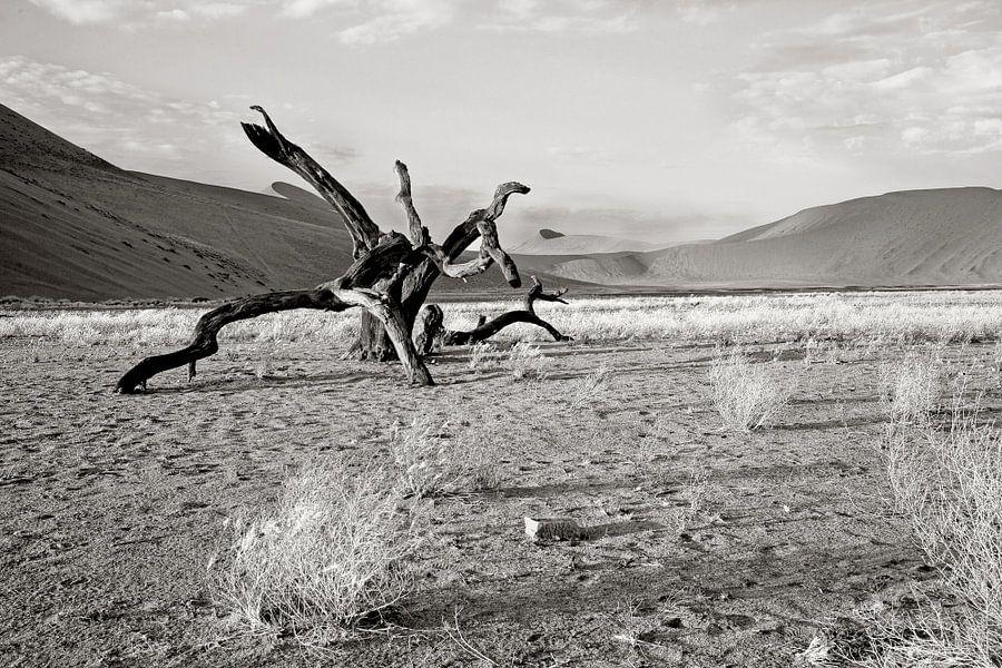 verstilde boom nabij dune 7 (Sosusvlei) in Namibië
