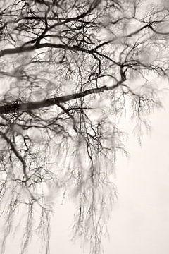 Winterse stemming van Lena Weisbek