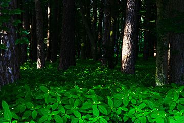 Dunkel Wald