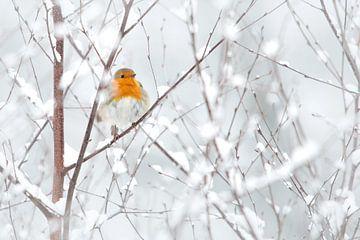 Roodborstje in de sneeuw von Aukje Ploeg