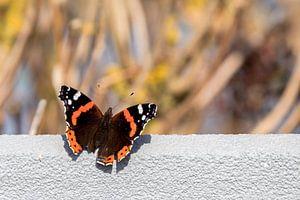 Vlinder op muurtje