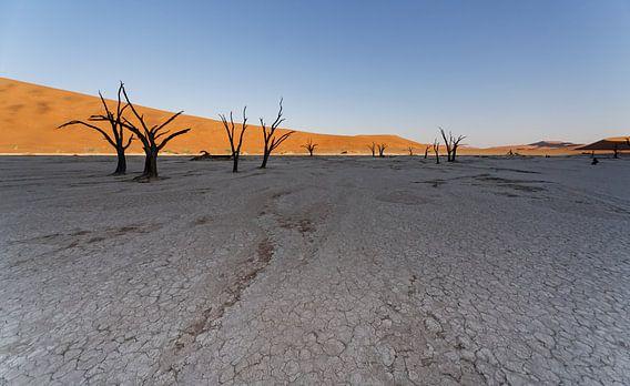 Deadvlei - Namibië
