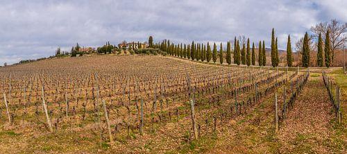 Toscaanse wijngaard in wintertijd