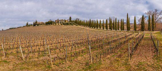 Toscaanse wijngaard in wintertijd van Teun Ruijters