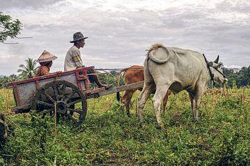 Boeren wagen van