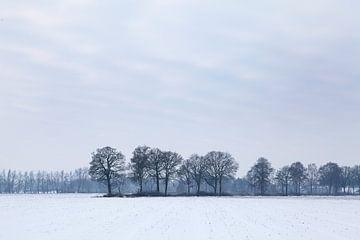 Winterlandschap met bomen von Liesbeth van Asseldonk