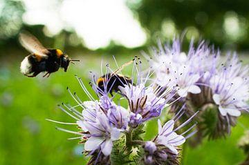Blumen und Bienen von Nick van Dijk