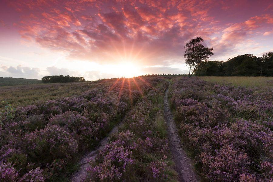 Heide in bloei op de Loenermark tijdens zonsondergang van Rob Kints