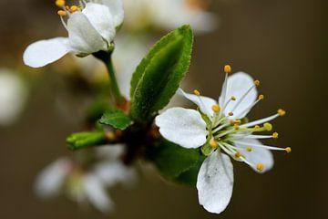 Blüte mit neuem Blatt von Gerard de Zwaan