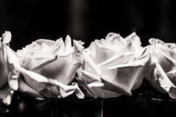 Roses are.... von