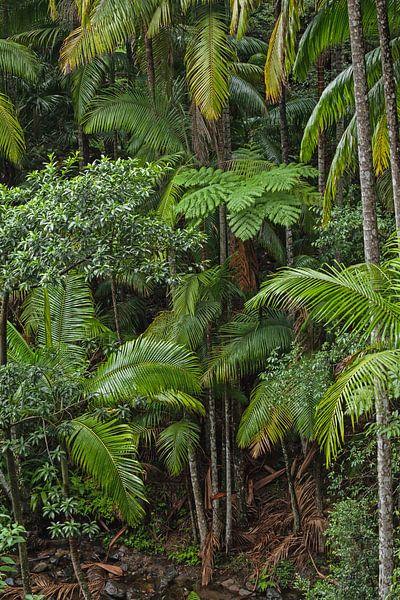Dschungel Paradies Wald - Farn und Palmen von Jiri Viehmann