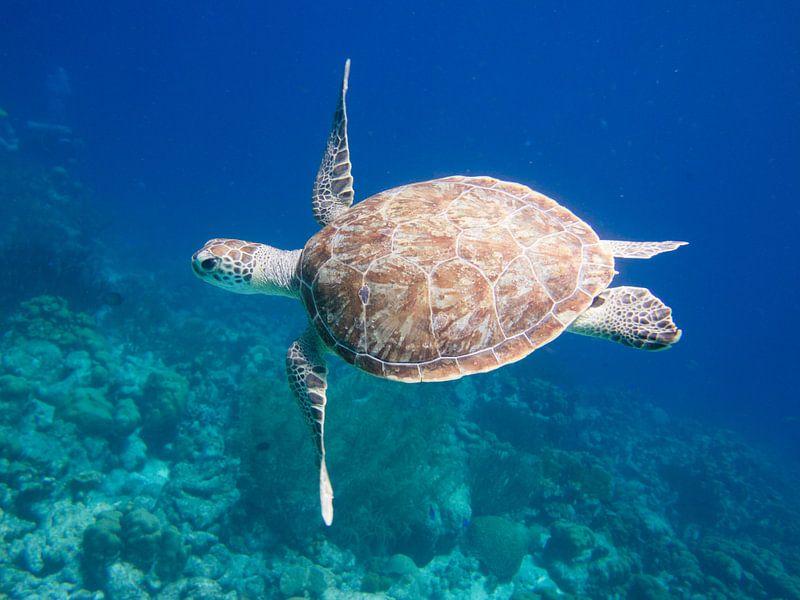 Zeeschildpad van Michael Rust