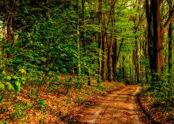 Waldweg van Gabi Siebenhühner