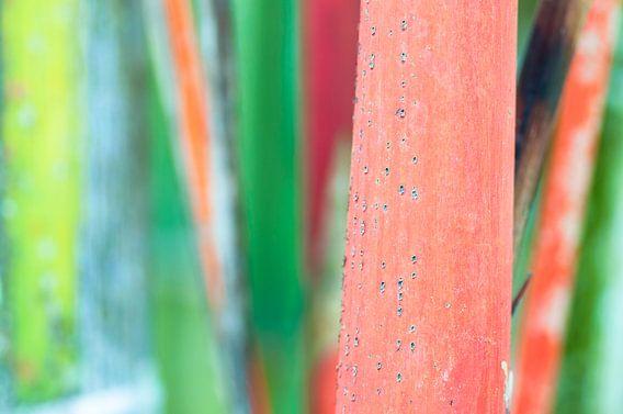 Rode bamboe in tropisch bos van Wijnand Loven