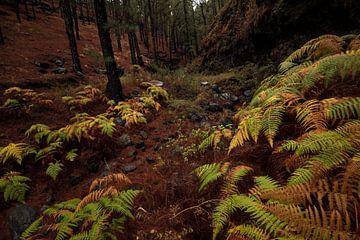 Bos op La Palma met herfstkleuren van Leon Doorn