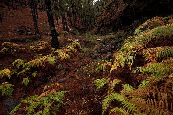Bos op La Palma met herfstkleuren