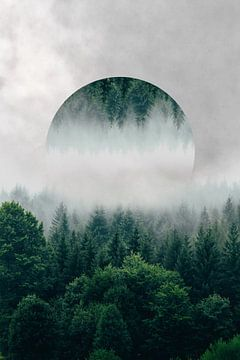 Bomen verstopt in laaghangende mist van Tom IJmker