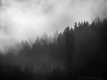 Trees in the fog 1 von Fernando Salgado
